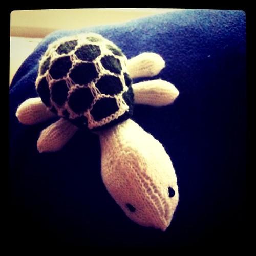 Darf ich vorstellen: Herr Schildkröte