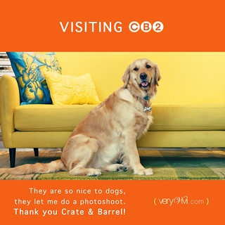 {12/52 2011} Crate & Barrel Is So Nice To Dogs!