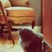 Chloe by autom4tica