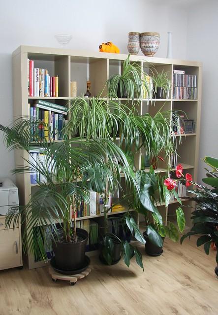 Tipps Für Yucca Palmen, Bräune Blätter & Co