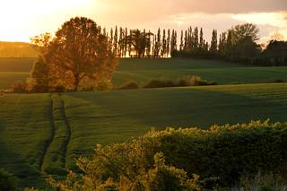 Bluebell meadow, Suffolk