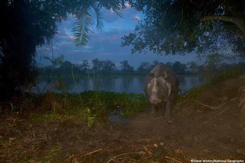 Rhino camera trap photo