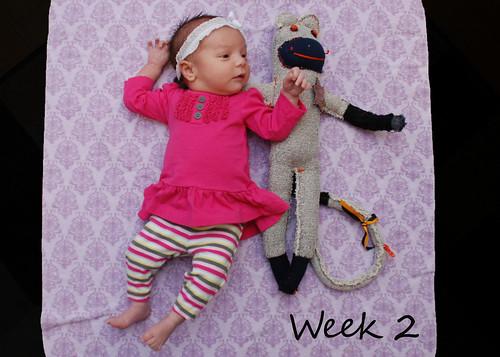 Week 2 - February 19, 2011
