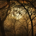 Moon Rise From Forest Floor (Explored at #18) by jackaloha2