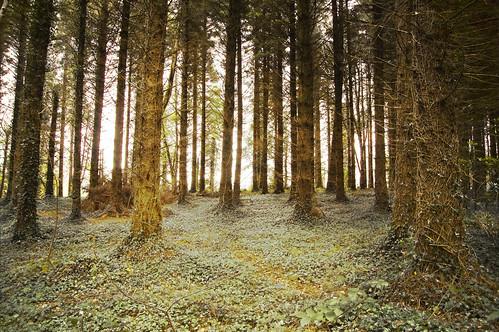 ireland texture woods northernireland fermanagh lougherne castlecaldwell nikond40