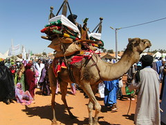 femme sur chameau