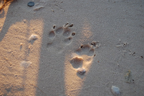 beach pawprints darkskies shiredisland