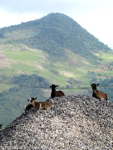 mountain signs hill tracks goat railway jamaica trainstations