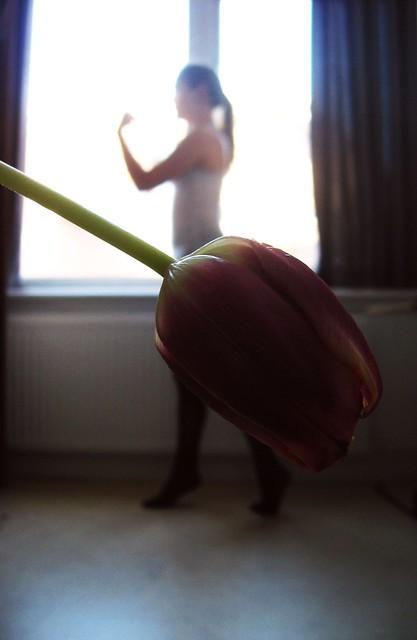 Tulip[2]