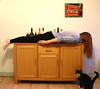 FDT - face down at the drinks cabinet - accompanied by a curious cat by fivedollarkitty