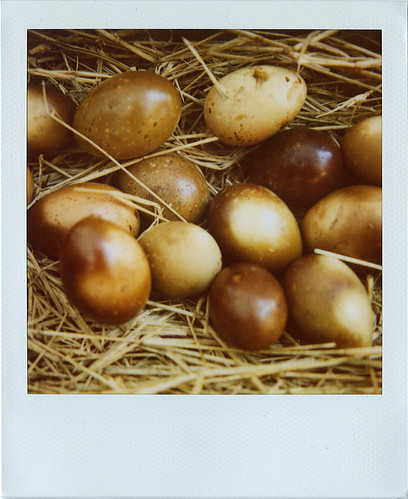 smoked eggs.