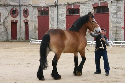 horses horse cheval 300views 300 each equine chevaux drafthorse ceffylau trait champagneardenne eich heavyhorse capall over300views trekpaard chevaldetrait equinephotography ardennais zugpferd capaill kezeg equinephotographer montierender harasnational traitardennais harasnationaldemontier