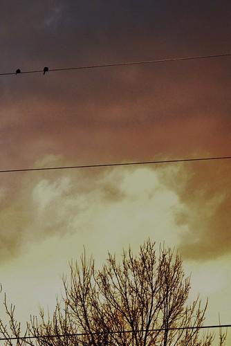 sunrise dawn va 54 doves harrisonburg