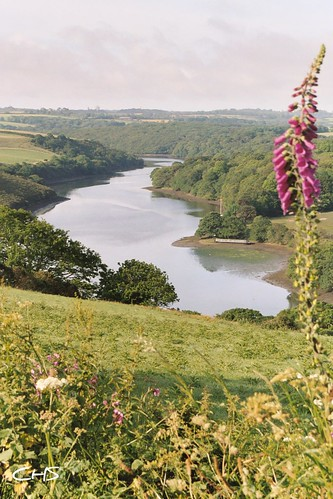 Spring on the Helford River, Cornwall by Stocker Images