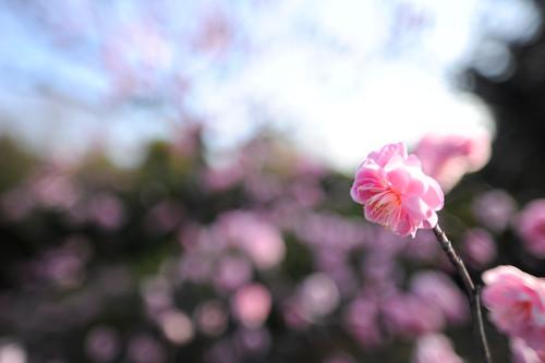 20110219 Shirotori Garden 1