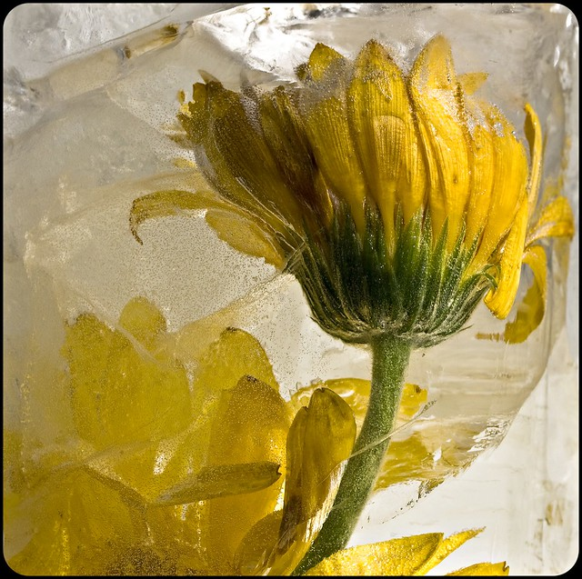 Ice with flower