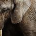 Elephant by doug.kukurudza