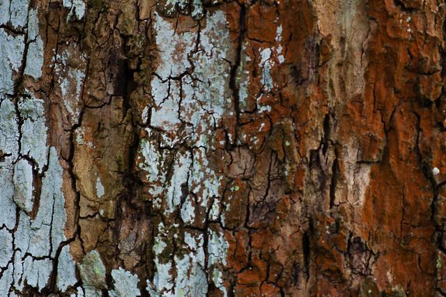Lichens on tree trunk