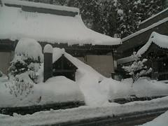 豪雪2011/1/31