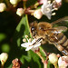 My First Bee of 2011 by Photospool