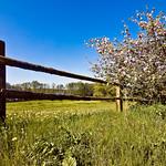 Springtime (20080510__DSC6827)