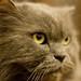 Yngwie, the cat by Wicked Vasco