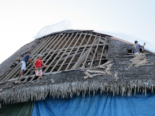 Thatching the roof, getting ready for burnination.