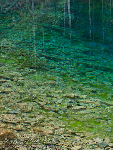 Grassi Lakes: Seeing Bottom Through Reflected Trees Yet Again