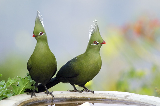 green bird great animal - photo #19