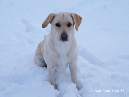 [Reunited] Mon, Feb 7th, 2011 Lost Male Dog - Bolaboy More -Glennagark, Oulart, Wexford