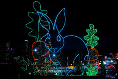 Rabbit #4