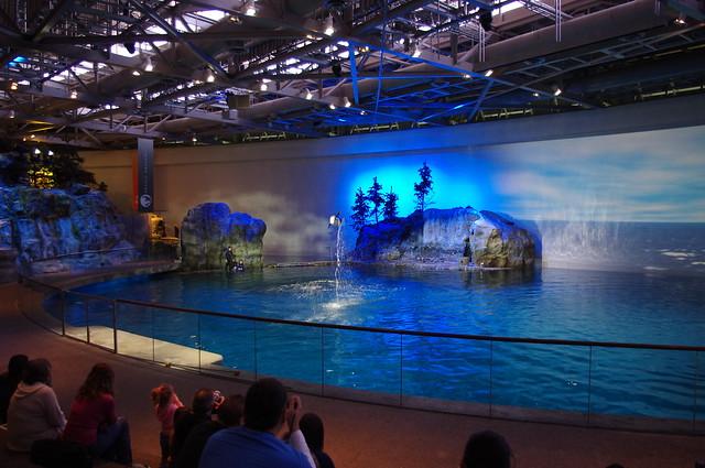 Chicago Shedd Aquarium Flickr Photo Sharing