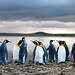 King Penguins by Will Burrard-Lucas | Wildlife