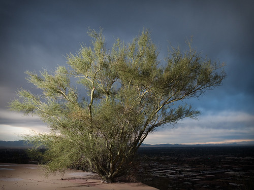 arizona sky clouds landscape bush desert threateningsky phoenixmountainpreserve shawbutte strobist