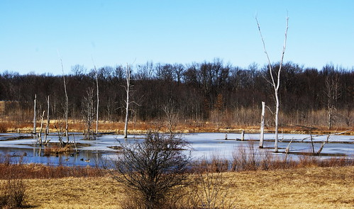 blue trees winter white ice water landscape frozen afternoon bare clear icy wetland