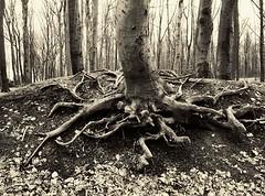 Öfter Wald #2