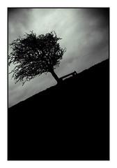fairymount farm tree