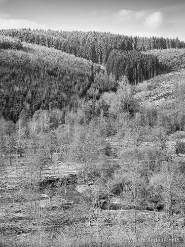 The Ardennes in B/W
