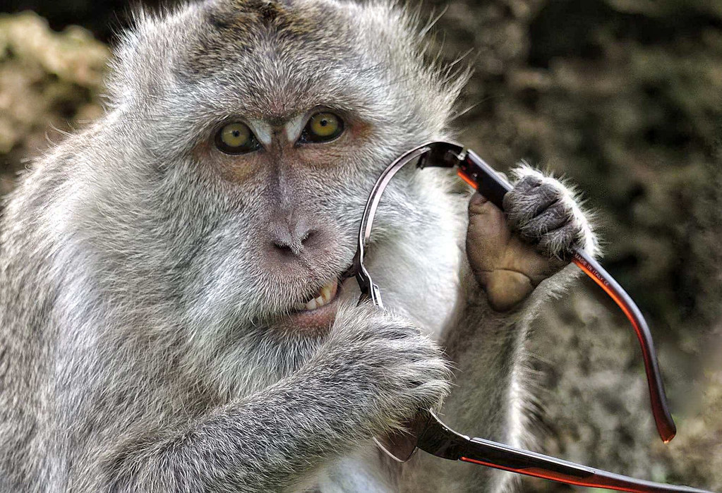 Monkey eats my Sunglasses