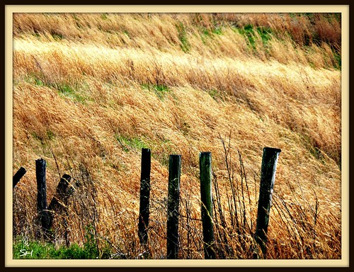 field fence mississippi landscape windy grasses absolutelyperrrfect