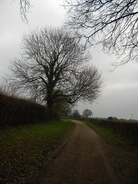 Big Tree by lane
