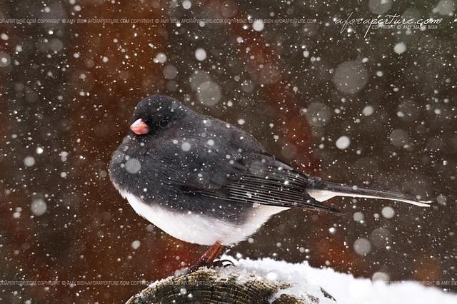 Fluffy Snow Bird 7653