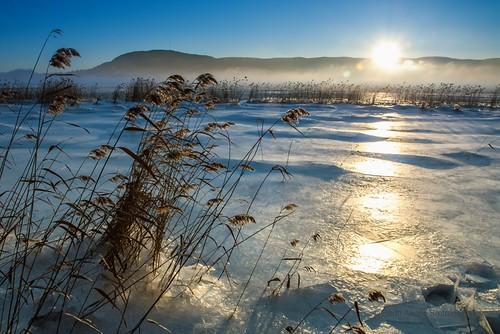 sunset mist snow ice norway fog norge is afternoon straw fjord february dis soon februar snø lier solnedgang tåke siv drammensfjorden strå buskerud ettermiddag canon450d drammenfjord tamron1750mmf28xrdiiivc