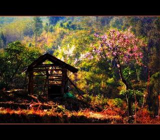 kohima landscape