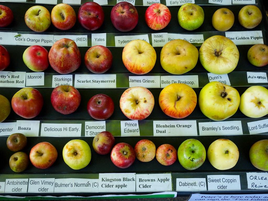 1000 images about apple varietiescultivars on pinterest