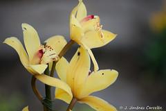 Flores para una presentación