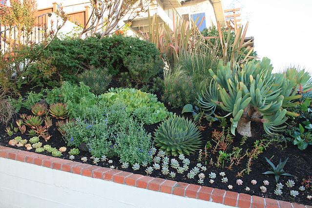 Succulent Rock Garden Ideas Photograph New Succulent plant