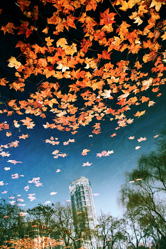 park blue autumn red sky orange lake snow color tree fall nature yellow landscape leaf quiet