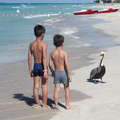 Two boys and a pelican by Gordana AM