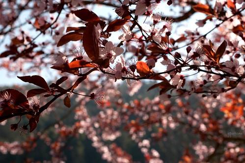 É Primavera!!!!! É vida reflorescida!!!!!